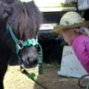 sarah checking Midgets hooves