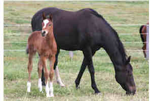 Golden Snake-Cyberline 2010 Colt Foal