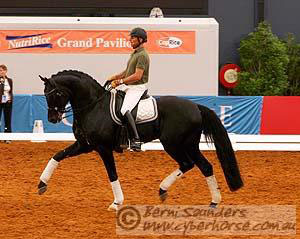 Shiraz Black ridden by Steffen Peters