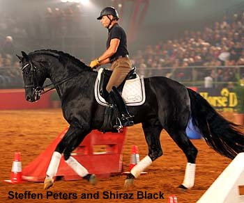 Steffen Peters on Shiraz Black